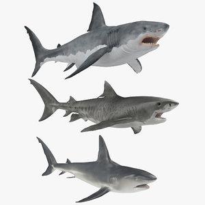 3D sharks rigged model