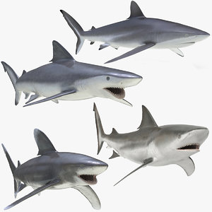 rigged sharks 3 model