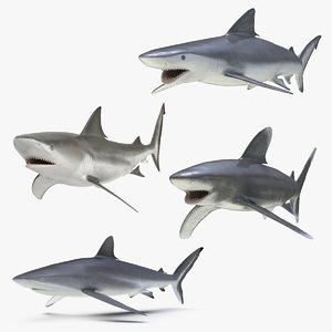 rigged sharks 4 model