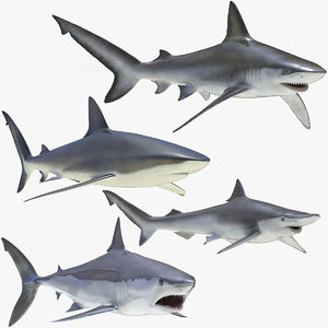 3D rigged sharks 4 model