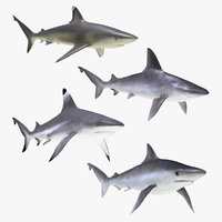 rigged sharks 5 3D