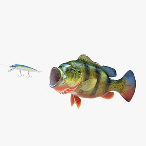 peacock bass 3D model