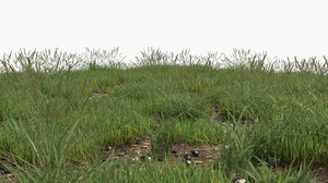 3D grass field 001