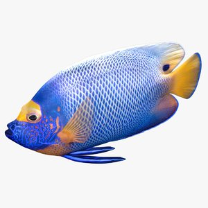 3D model blueface angelfish rigged