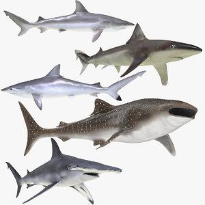 rigged sharks 6 3D