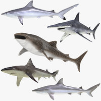 rigged sharks 6 3D model