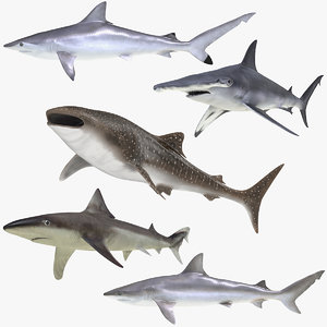 rigged sharks 6 3D model