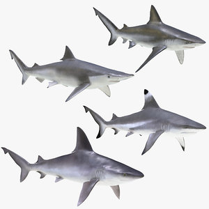 3D sharks rigged 7