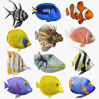 Saltwater Fish Animated Collection