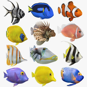 saltwater fish animation model
