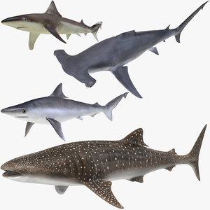 sharks rigged 8 3D model