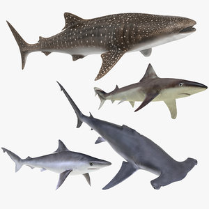 sharks rigged 8 model
