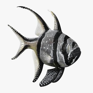3D banggai cardinalfish animation bones model