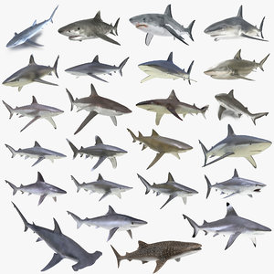 3D sharks rigged 9 model