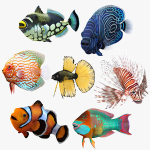 3D model coral fishes rigged