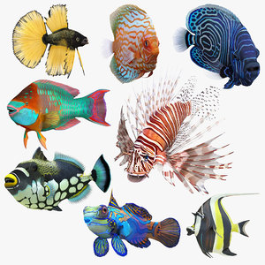 3D model coral fishes rigged 2