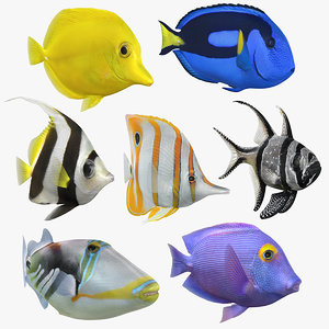 saltwater fish 2 animation 3D model