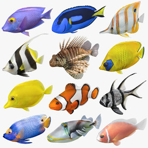 saltwater fish rigged 3D model