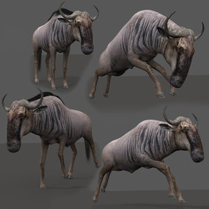 3D wildebeest animation