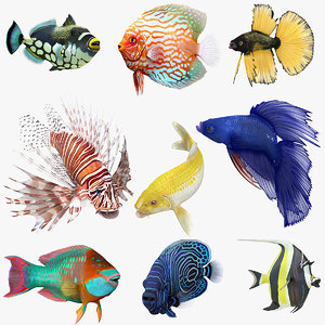 3D model coral fishes rigged 3