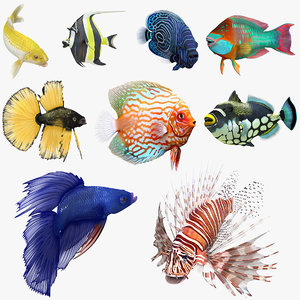 coral fishes rigged 3 3D