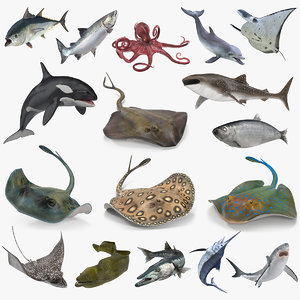 3D fishes 4 rigged