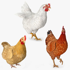 3D model rigged chickens