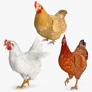 3D rigged chickens