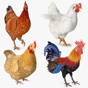 rigged rooster chickens 3D model