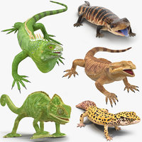 Lizards Rigged Collection for Cinema 4D