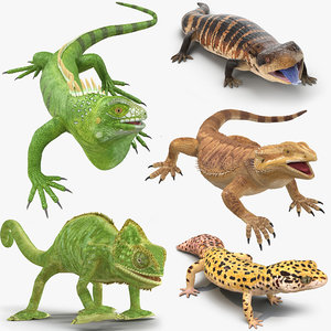 3D model lizards rigged
