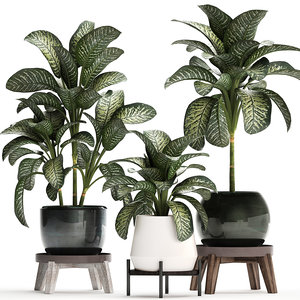 ornamental pot dieffenbachia model