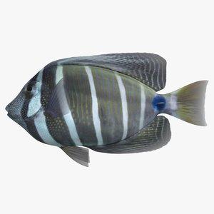 3D sailfin tang