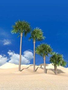 bismarckia palm 3D model