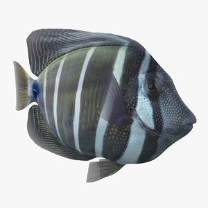 sailfin tang animation 3D model