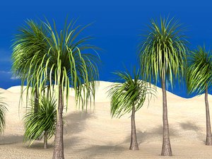 ponytail palm 3D