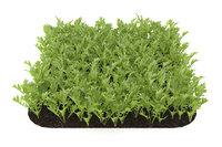 3D arugula garden bed model