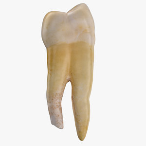 molar lower jaw left 3D model