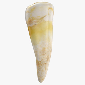 3D model premolar lower jaw 02