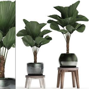 ornamental pot licuala model