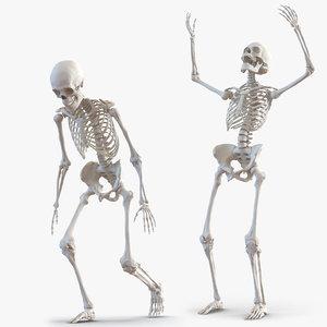 human skeletons rigged 3D