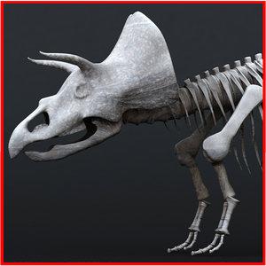 3d triceratops skeleton t-rex dinosaur