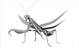 3D model praying mantis