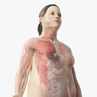 Full Obese Female Anatomy Rigged