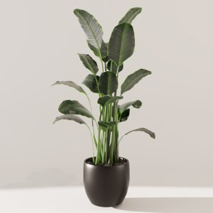 green plant model
