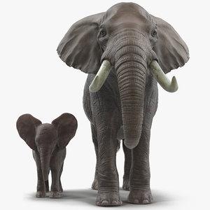 3D elephants rigged model