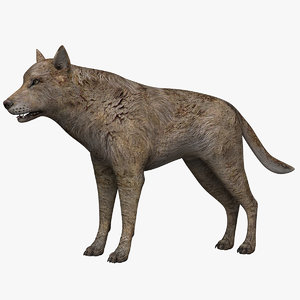 3d model of wolf