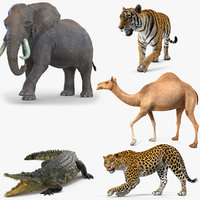 African Animals Rigged Collection 2 for Cinema 4D