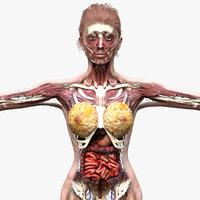 FemaleAnatomyComplete Pack 3D