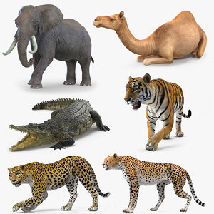 3D african animals 3 rigged model